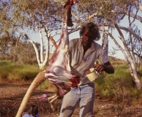 roger-solomon-skins-kangaroo
